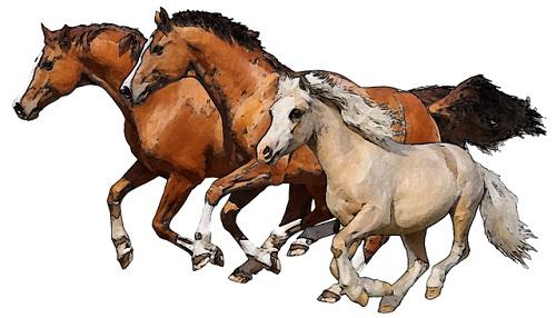 Bay_Horses.jpg